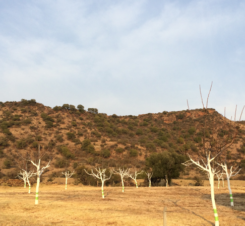 Land conservation and justice as old as the hills