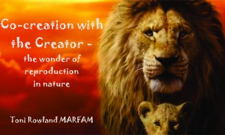 CO-CREATION WITH THE CREATOR – the wonders of reproduction in nature